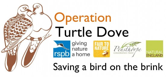 operationturtledove.org