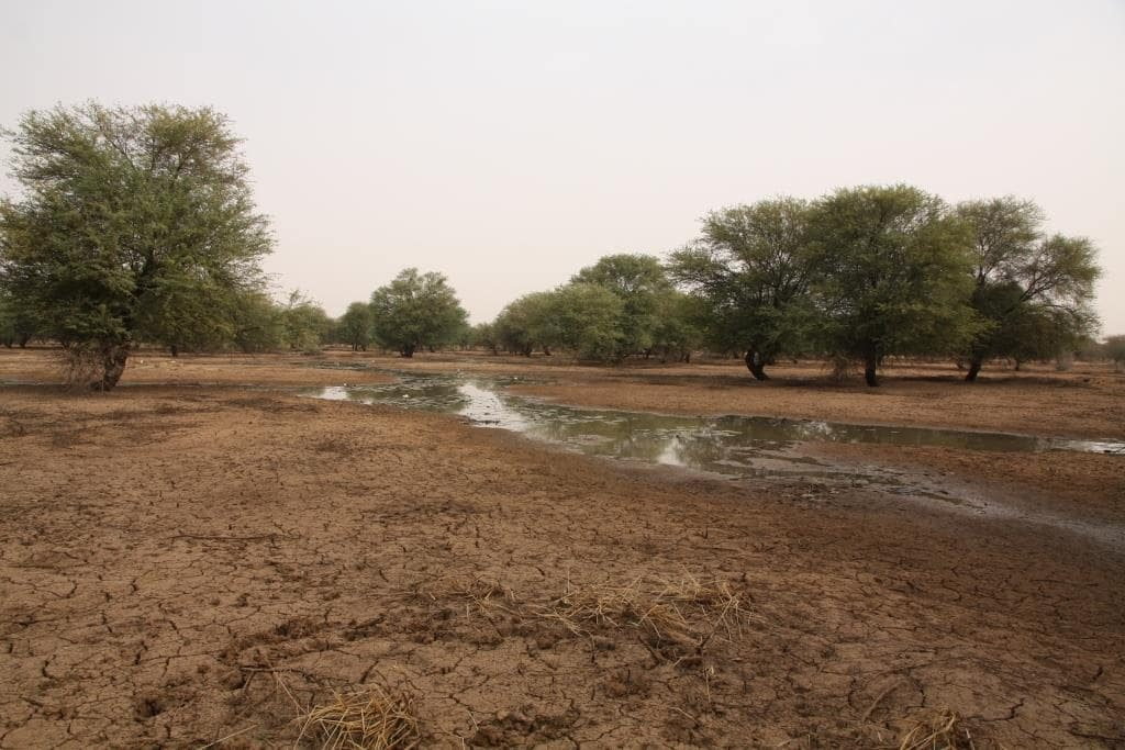 Photo: Northern Senegal River in January. Credit: Chris Orsman
